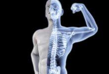 Photo of دليلك .. للحفاظ علي صحة وقوة عظامك