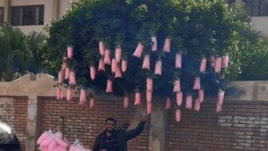 """Photo of شجرة غزل البنات.. فكرة """"محمد عمير"""" تثير إعجاب زبائنه"""
