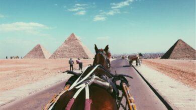 Photo of جولة بعربة الخيل داخل منطقة الأهرامات بالجيزة – مصر ٢٠٢٠